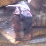 Damp Wood 006