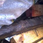 damp wood2 002